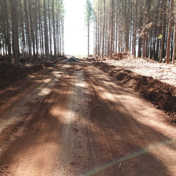 road construction in a forest