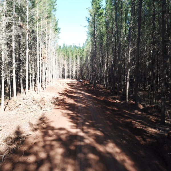 newly flattened forest road