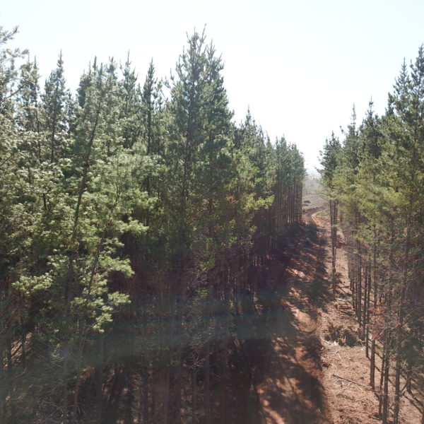 forest with newly flattened road