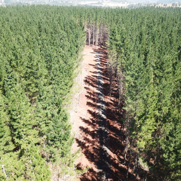 top view of forest with newly repaired road
